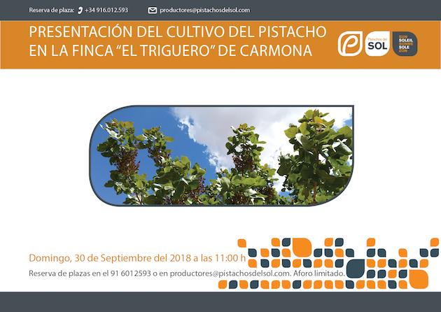 Cultivo del pistacho Carmona